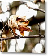 Autumn Leftovers Metal Print