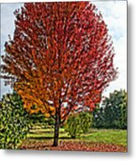 Autumn Maple Emphasized Metal Print