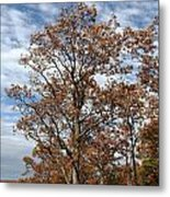 Autumn Oaks White Clouds Metal Print