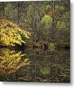Autumn On The Pond Metal Print