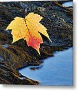 Autumn On The Tellico River - D004558 Metal Print
