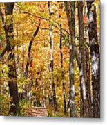 Autumn Path 2 Metal Print