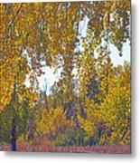 Autumn Picnic Spot Metal Print