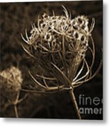 Autumn Pod Metal Print