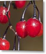 Autumn Red Berry Sparkle Metal Print