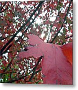 Autumn Red Maple Tree Metal Print