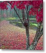 Autumn Red Metal Print