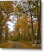 Autumn Road Colors Metal Print