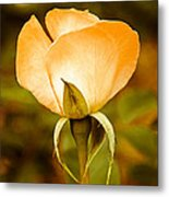 Autumn Rose Metal Print by Cheri Randolph