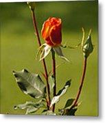Autumn Rose Metal Print