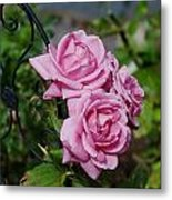 Autumn Roses Metal Print