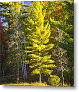 Autumn Scene Of Colorful Trees On The Little Manistee River In Michigan No. 0855 Metal Print