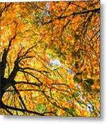 Autumn Sky Metal Print