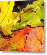 Autumn Spotlight Metal Print