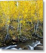 Autumn Stream Iv Metal Print