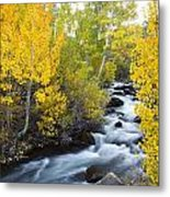 Autumn Stream V Metal Print