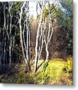Autumn Sumacs Metal Print