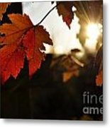 Autumn Sunburst Metal Print