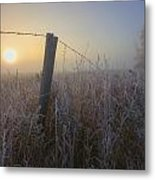 Autumn Sunrise Over Hoar Frost-covered Metal Print