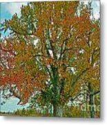 Autumn Sweetgum Tree Metal Print