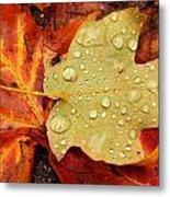 Autumn Treasures Metal Print by Matthew Green