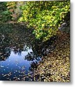 Autumn Tree Colors In Central Park In New York City Metal Print