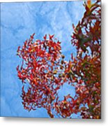 Autumn Trees Art Prints Blue Sky White Clouds Metal Print