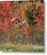 Autumn Vermont Geese And Color Metal Print