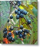 Autumn Viburnum Berries Series #2 Metal Print