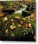 Autumn View Shows Fallen Leaves Metal Print
