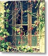 Autumn Vines Across A Window Metal Print