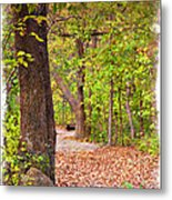 Autumn Walk - Impressions Metal Print