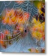 Autumn Web Metal Print