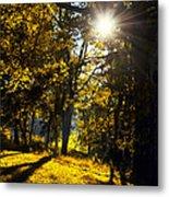 Autumnal Morning Metal Print