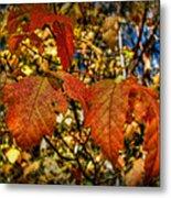 Autumn's Gold Metal Print