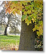 Autumn's Gold Metal Print