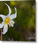 Avalanche Lily Metal Print
