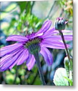 Avatar's Pericallis Metal Print by Rory Sagner