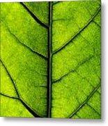 Avocado Leaf 2 Metal Print