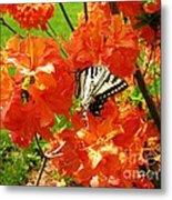 Azalea And Butterfly 1 Metal Print