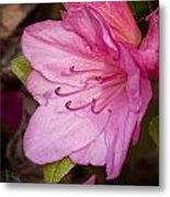 Azalea Up Close And Personal Metal Print by Michael Putnam