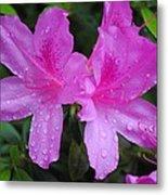 Azalea's In Spring Rain #1 Metal Print