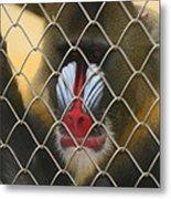 Baboon Behind Bars Metal Print