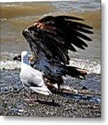 Baby Bald Eagle Movement Metal Print