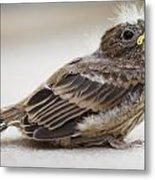 Baby Bird 1 Metal Print