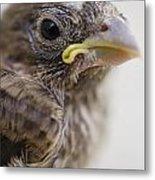 Baby Bird 3 Metal Print by Jessica Velasco