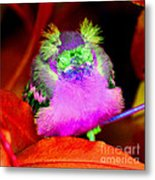 Baby Bird Of A Different Color Metal Print