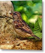 Baby Birdie Metal Print