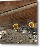 Baby Birds  Picture Metal Print by Preda Bianca
