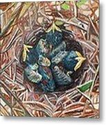 Baby Birds Metal Print